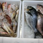Metochi Fresh Fish