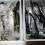 Metochi Fresh Fish